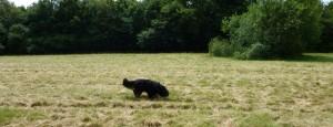 Me. In a field.